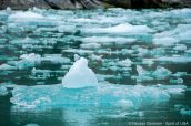 Morceaux de glace dans Tracy Arm, Alaska