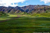 Montagnes à Eielson View, Denali National Park