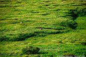 Deux wapitis se reposent dans les plaines de Denali National Park
