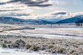 Lamar Valley sous la neige et le gel début octobre, Yellowstone National Park