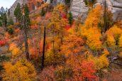 En octobre, les arbres se parent de belles couleurs automnales dans la partie sud de West Rim Trail, Zion National Park